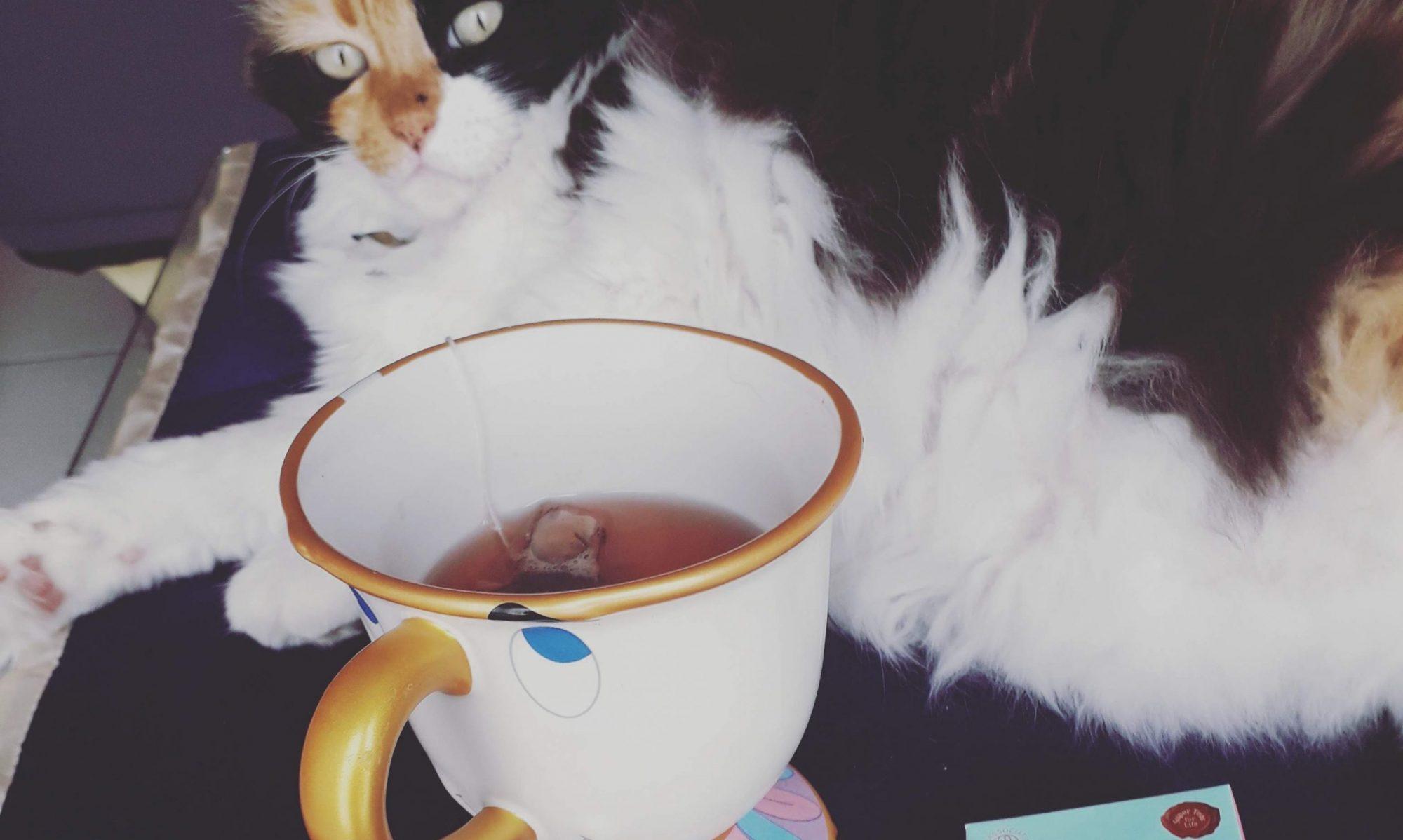 L'académie du chat lettré